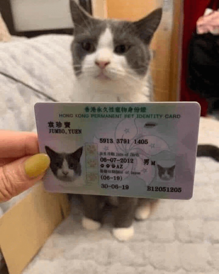 Cats Can Now Be A Permanent Resident