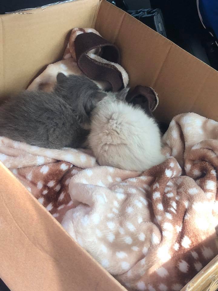 two kitten with a new home